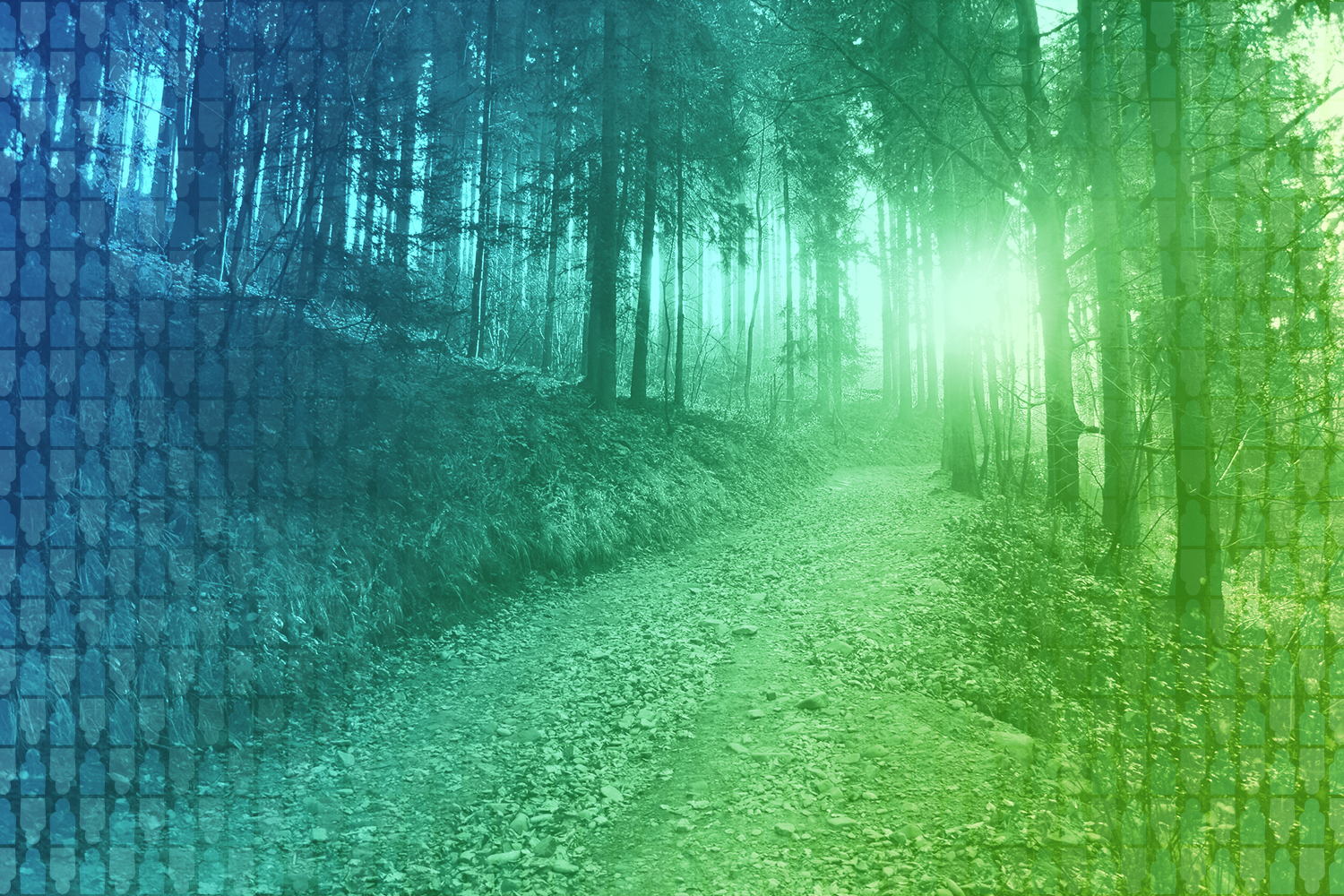 color-treated image of path leading upwards through the woods